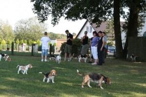 Beagles vom Deistertal
