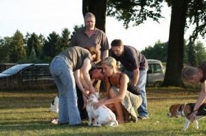 Beagle erste Hilfe verarzten