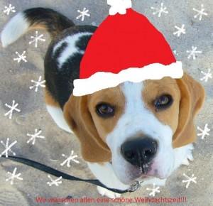 Anderson als Weihnachtsbeagle