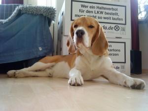 Gerade genug Platz für einen Beagle wie mich!