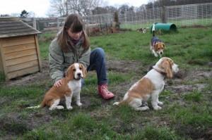 Beagle und Kinder