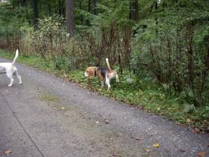 Ausflug mit Beagle in den Deister