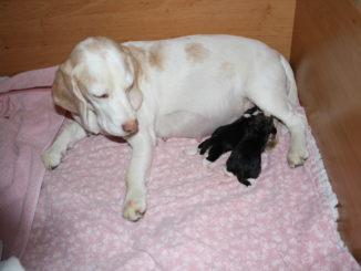 Geburt Yvis Welpen