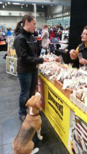 Beagle Beethoven liebt Conny's Hundekekse