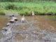 Beagles Hahnenklee Harz
