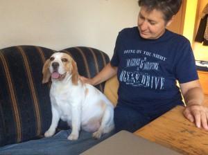 Trächtige Beaglehündin Hermine 2015
