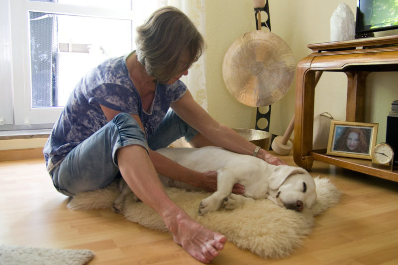 Beagle Yvi genießt die Reiki-Behandlung