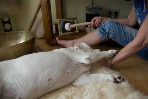 Reiki und Klangmassage für den Hund
