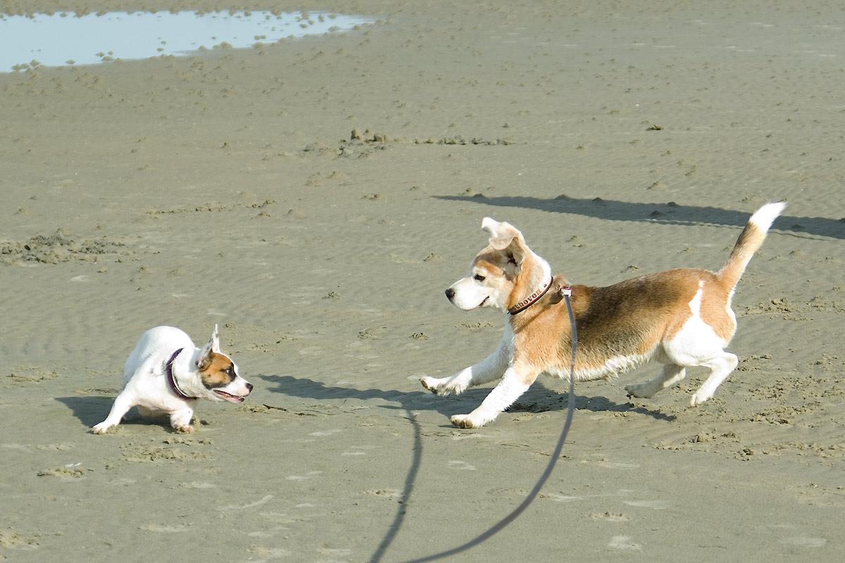 Beethoven findet eine neue Freundin am Strand