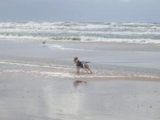 Beagle Anderson am Meer