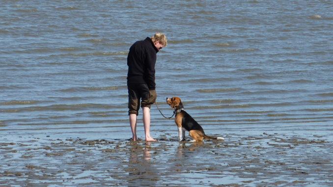 Beagle Neo Ostfriesland