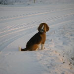 Beethoven im Schnee
