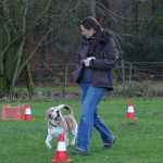 Beagle Beethoven im Parcours
