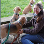 Beagles vom Deistertal beim RallyO-Tunier
