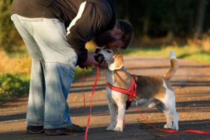 Beagle, Herr und Dummy